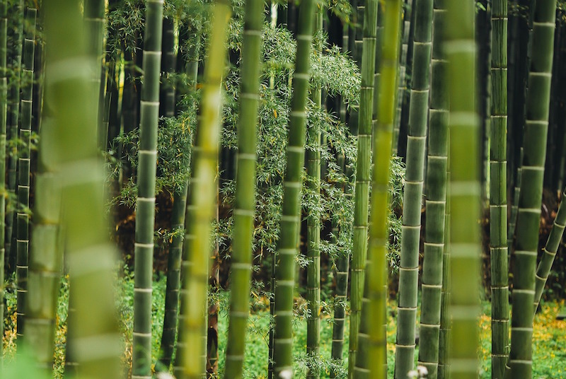 vloerenkwartier bamboe plant